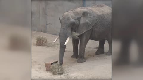 Elephants at Milwaukee County Zoo get Easter baskets